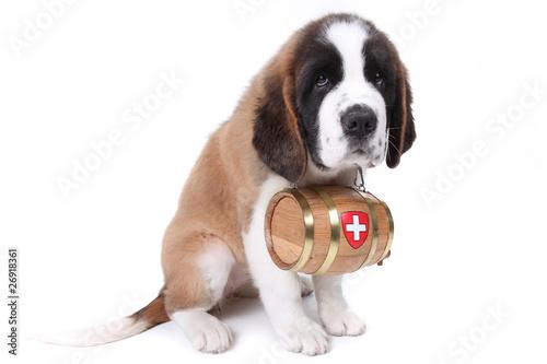 Fotografie, Obraz  A Saint Bernard puppy with rescue barrel around the neck