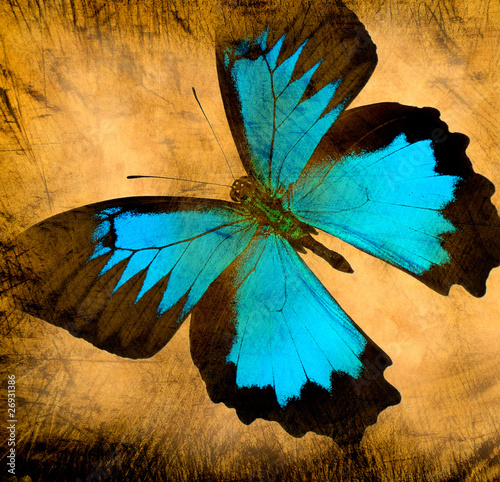 Cadres-photo bureau Papillons dans Grunge old grunge butterfly paper texture background