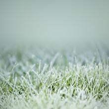 Grass On Ice