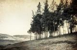 zabytkowe drzewa - 26940362