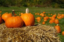 Pumpkins On Top Of Hay Bale With Pumpkin Patch In Background