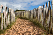 A Sandy Path In Dunes With Woo...