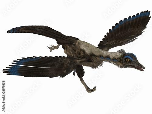 Archaeopteryx - 3D Dinosaurier