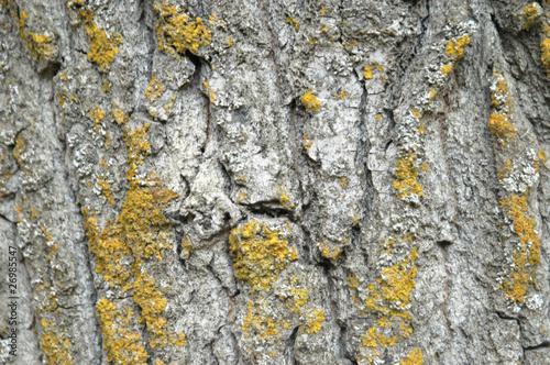 Fotografia  Textura de tronco
