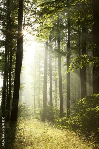 Papiers peints Foret brouillard Bright light falling into the misty forest at dawn