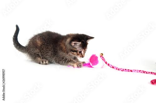 Spoed Foto op Canvas Tijger Cute tabby kitten with pink toy
