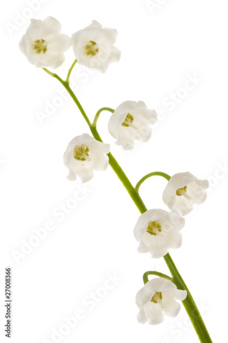 In de dag Lelietje van dalen Lily of the valley isolated