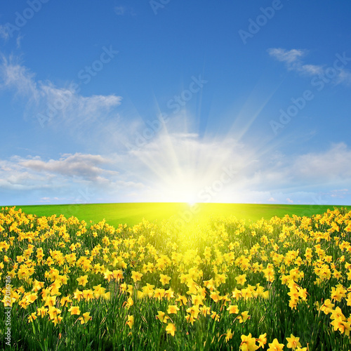 Poster Jaune Spring meadow and sun