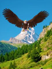 Fototapetaamerican bald eagle blue sky mountain landing