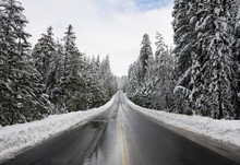 Road Through Snowy Forest