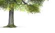 canvas print picture - Der Baum - freigestellt 01