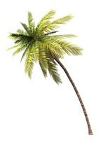 3D Kokosnusspalme