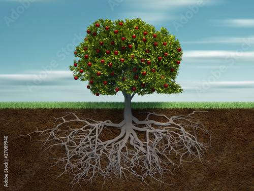 Tablou Canvas Conceptual tree with apple and root