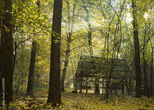 Papiers peints Foret brouillard Paśnik jesienią