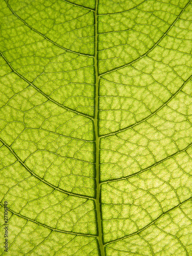 Recess Fitting Macro photography Leaf of a tree a close up