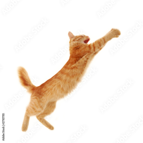 Photo  kitten jumping