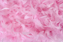 Small Pink Feathers In Pile | ...