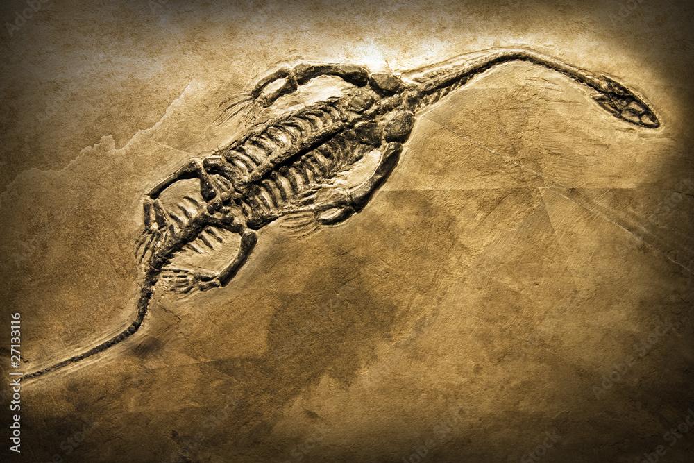 Fotografia  Fossil