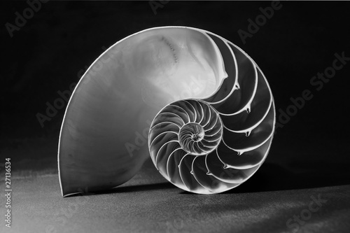 Black and white nautilus shell with geometric pattern