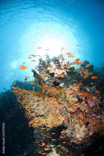 Fototapety, obrazy: Vibrant and colourful underwater tropical coral reef scene.