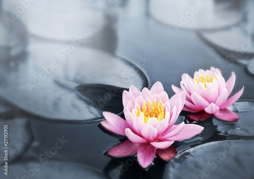 Foto op Aluminium Waterlelies Lotus blossoms