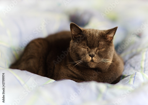 Katze im Bett Stock-Foto | Adobe Stock