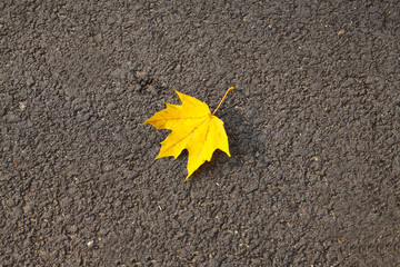 Autumn - One yellow leaf on the street