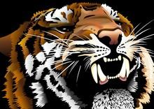 Tigre Testa-Tiger Head-Vector