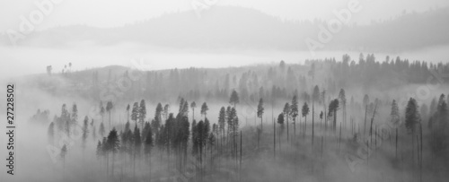 Poster Morning with fog Yosemite Forest in Clouds