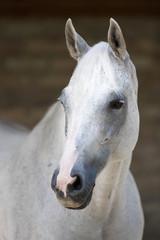Pferd Schimmel