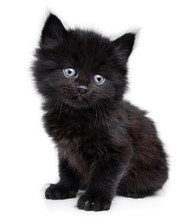 Black Little Kitten Sitting Do...