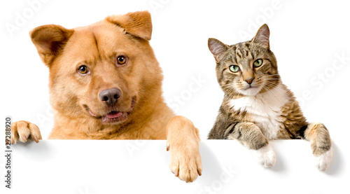 Photo  Dog and Cat above white banner