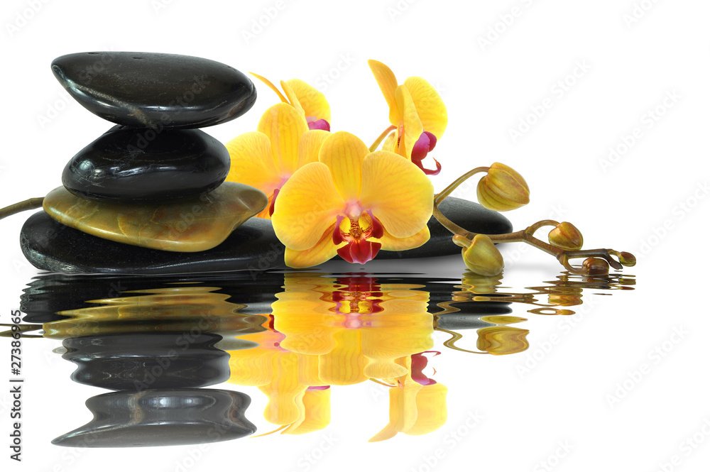 Plissee mit Motiv - Orchideen 92