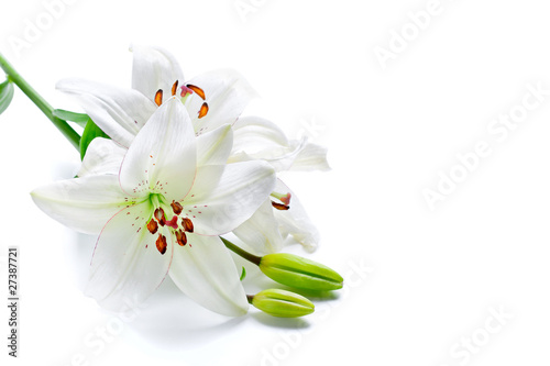 Photo  Beautiful lily flowers, isolated on white