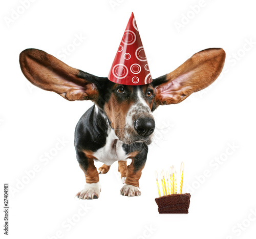 Fotografia, Obraz  cake dog card