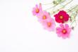 ピンクのコスモスの花束