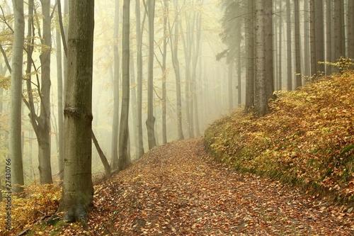 Foto auf Acrylglas Wald im Nebel Lane through the mysterious woods on a foggy autumn morning