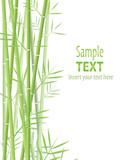 Fototapeta Sypialnia - bamboo vector background