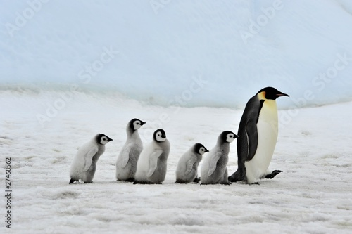 Photo sur Aluminium Antarctique Emperor Penguin