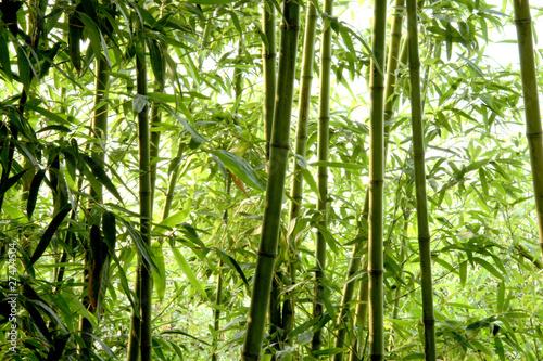Keuken foto achterwand Bamboo 竹