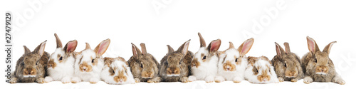 group of rabbits in a row Canvas Print