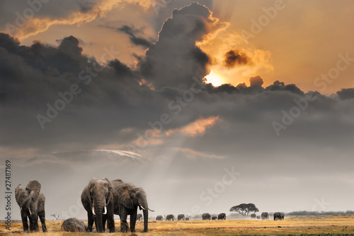 Staande foto Afrika African sunset with elephants