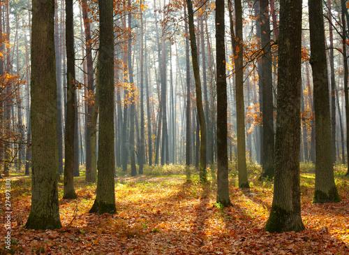 Fototapeta las drzewa-w-jesiennym-lesie
