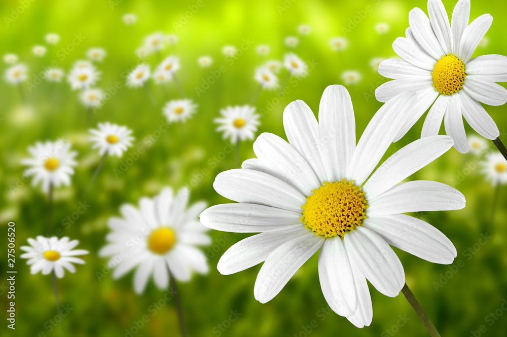 Fototapety, obrazy: Blumen 195