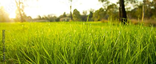 Fotografie, Obraz  Lush Grass