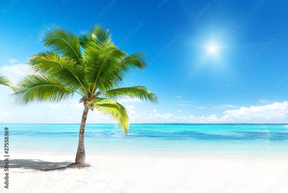 Fototapeta palm and sea