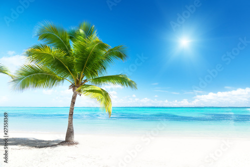 Deurstickers Tropical strand palm and sea