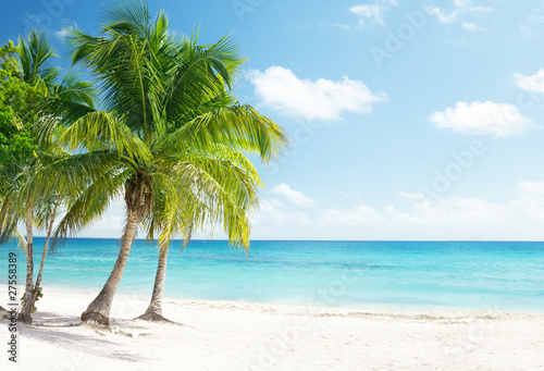 Wall mural - Caribbean sea and coconut palms