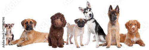 large group of puppies © Erik Lam