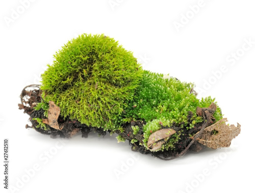 Fotografie, Obraz  Green Moss Isolated on White Background